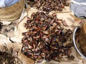 Smoked fish (Togo) 01
