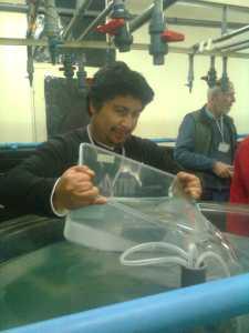 Larvae to the Larval Rearing Tank (2)