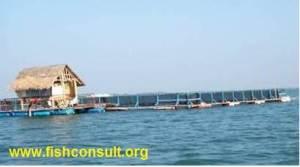 Marine cage farming (Philippines) 01