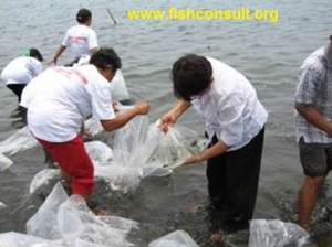 Fish release in the Philippines 02b