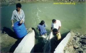 Iran - Shrimp farming