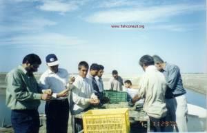 Iran - shrimp sorting