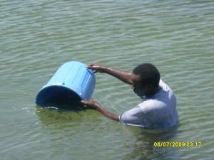 Releasing tilapia fingerlings in Lake Nasser