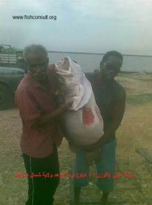 Sudan (introduction of Nile perch in ER Rahad Reservoir