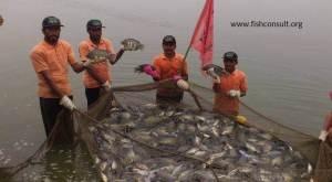 Promoting tilapia culture in field days in Pakistan (02)
