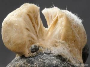 Bering Sea (new sponge species)