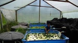 Small scale aquaponic project in Colombia