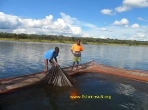 Tilapia cage culture in Zambia (01)