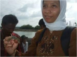 Mud crab culture in Indonesia