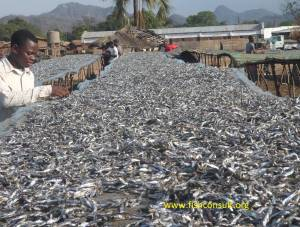 Fish sun-drying in Malawi