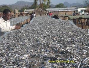 Fish sun-drying in Malawi