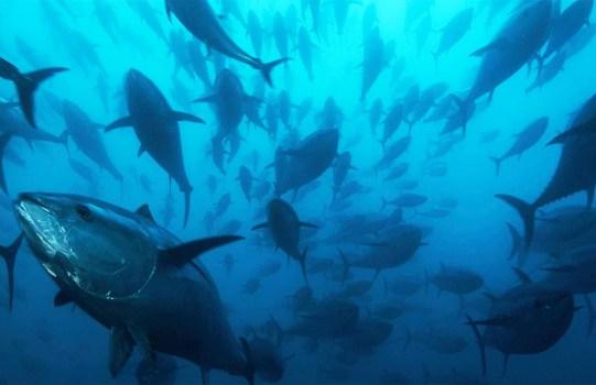 Costa Rica Fishing Illegal