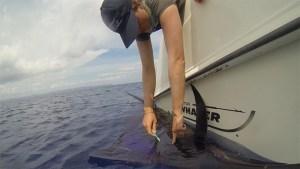 Costa Rica Sailfish Tagging