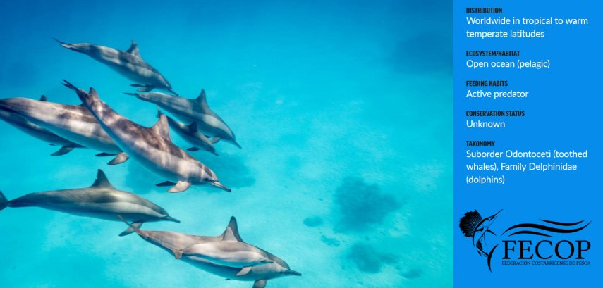 Costa Rica Spinner Dolphin