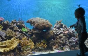 A reef crest exhibit at the newly renovated Toledo Zoo Aquarium. Photo credit: Toledo Zoo, Andi Norman.