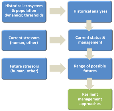 Flow of analyses required for developing resilient management approaches for addressing cumulative impacts in large salmon watersheds. Credit: David Marmorek