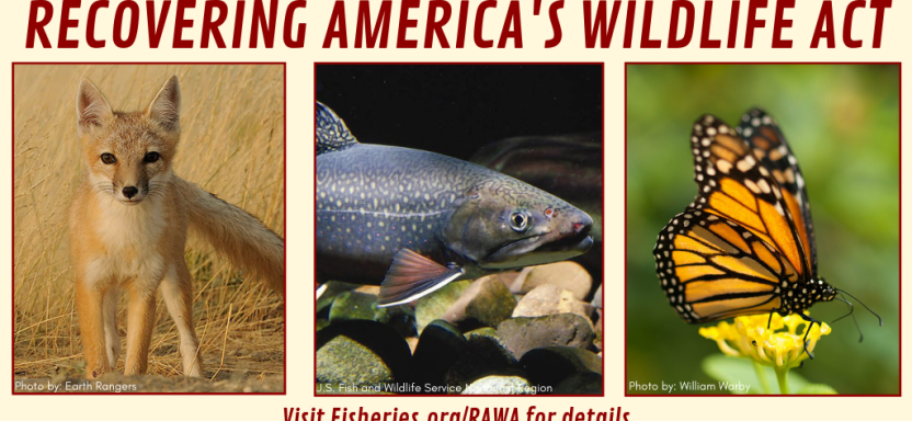 "<a href=""https://fisheries.org/policy-media/recovering-americas-wildlife-act/"">Recovering America's Wildlife Act</a> slide"
