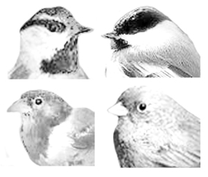 Four Common Winter Birds