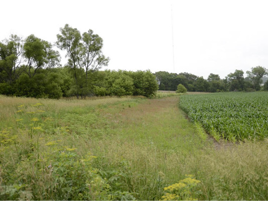 This quail buffer in Madison County, Iowa was installed by the Rabinowitz family with help from NRCS.