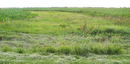 Farmers installed grassed waterways to slow water and prevent polluted runoff in the watershed.