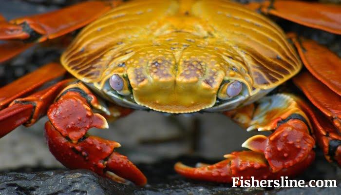 trotline crabbing