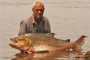 Giant Tiger fish