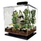 Tetra Cube 3-Gallon Aquarium Kit review