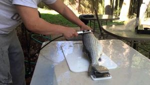 best electric fish scaler review