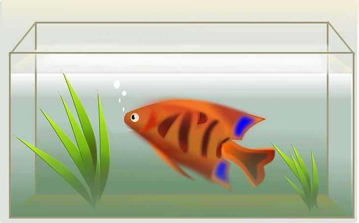 How to Choose Fish Aquarium to Buy
