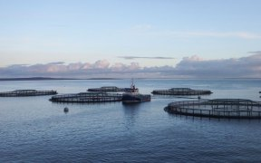 Fusion-Marine-secures-new-£1m-contract-from-salmon-producer