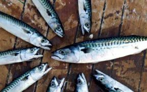 SCOTTISH INSHORE FISHERIES CONFERENCE