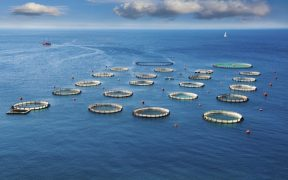 Aquaculture Innovation Europe Opens