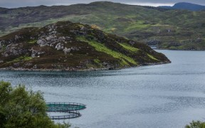 Scots Salmon Farm Report Provides Opportunity