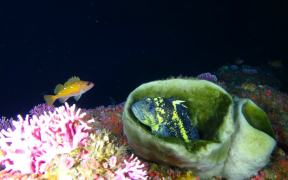 NEW DISCOVERIES IN DEEP SEA CORAL HABITATS