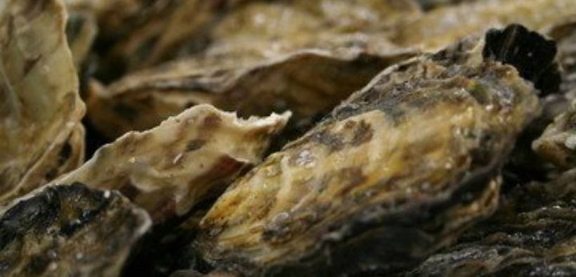 OYSTER AQUACULTURE CAN LIMIT DISEASE IN WILD POPULATIONS