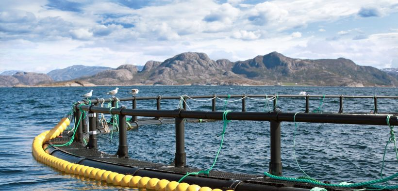 AQUACULTURE AWARDS NOW OPEN FOR ENTRY