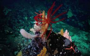 CALL FOR MORE PROTECTION OF COSTA RICAN SEAS