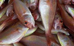 New Environmental Fisheries Collaboration