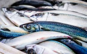 Utilising Fish Waste A Huge Challenge
