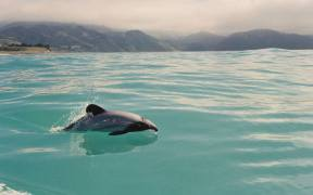 NEW RESEARCH ON THREATS FACING DOLPHINS
