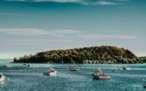 NZ FISH STOCKS IN GOOD SHAPE