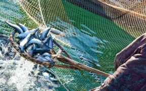 SEAFOOD EXPERTS TO SET OUT STEPS TO END OVERFISHING