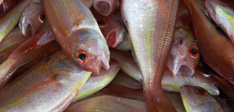 STOP EATING FISH ARTICLE