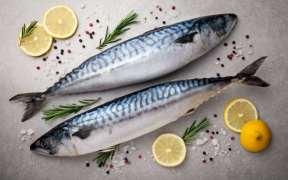 FISH WITHOUT POLLUTANTS