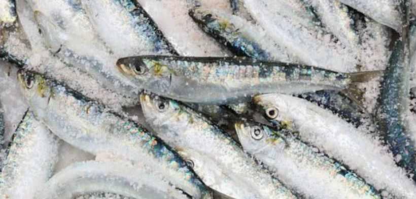 Cornish and Shetland Fisheries