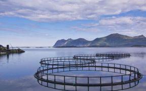EUROPEAN MARITIME & FISHERIES