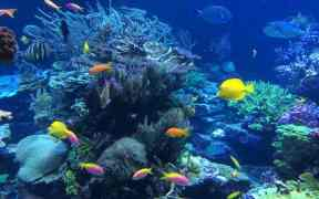 GUAM REEF FISH