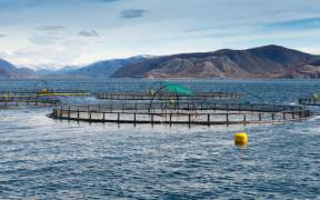 Scottish Salmon Production Falls