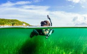 UK'S BIGGEST SEAGRASS RESTORATION SCHEME
