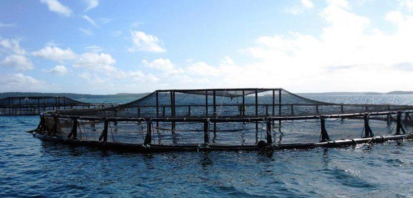 New App answers aquaculture